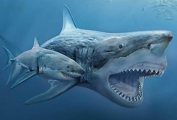 Prehistoric Animal Ancestors Versus Modern Relatives