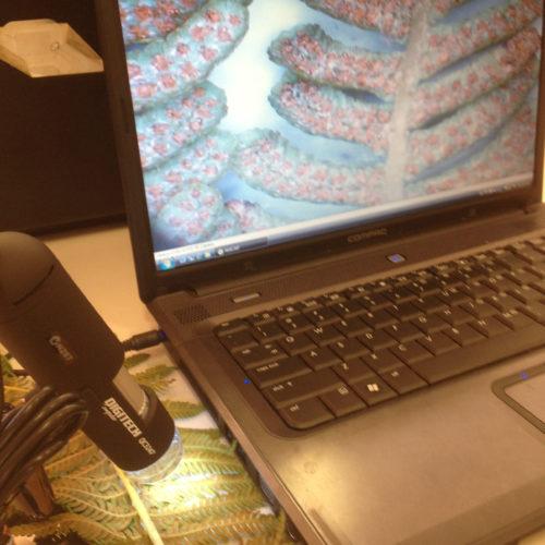 Digital microscope examining a fern