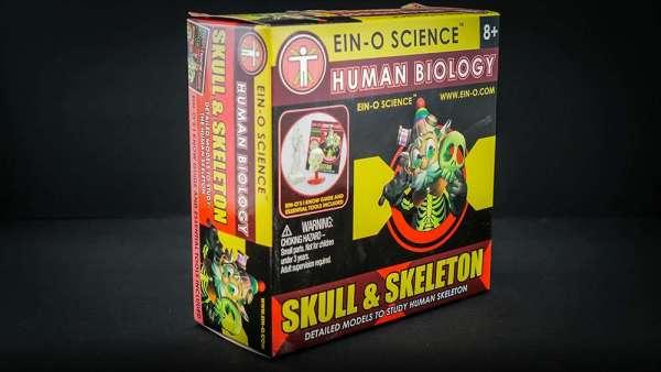 Ein O Science Skull & Skeleton