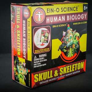 Ein O Science Skull & Skeleton