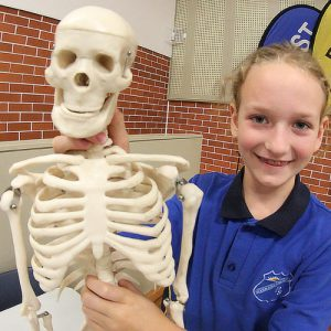skeleton with student