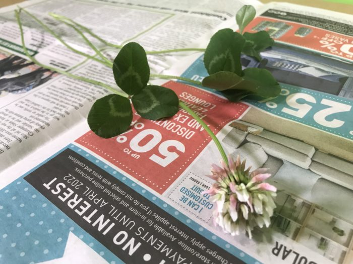 Create a plant collection - plant on newspaper