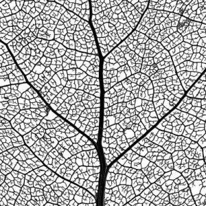 Make a leaf skeleton science experiment - leaf skeleton pattern
