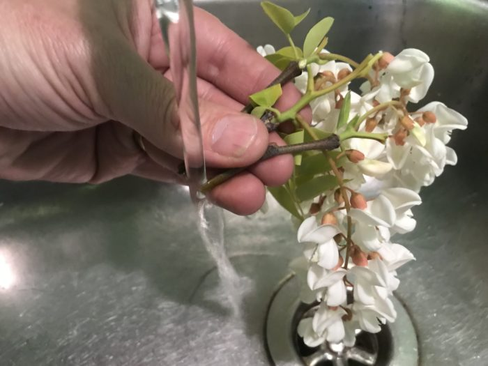 Make coloured petals science experiment - running a cut plant stem under water