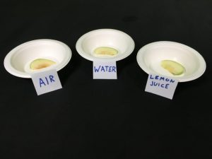 Why Does Fruit Go Brown Science Experiment - end results apple in air, water and lemon juice