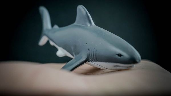 Great white shark replica_3