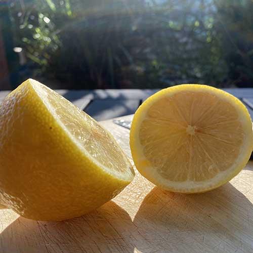 A lemon chopped in half