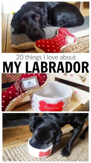 20 things I love about my labrador