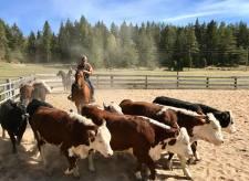 Working Horses med kor