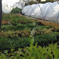 small-scale vegetable cultivation