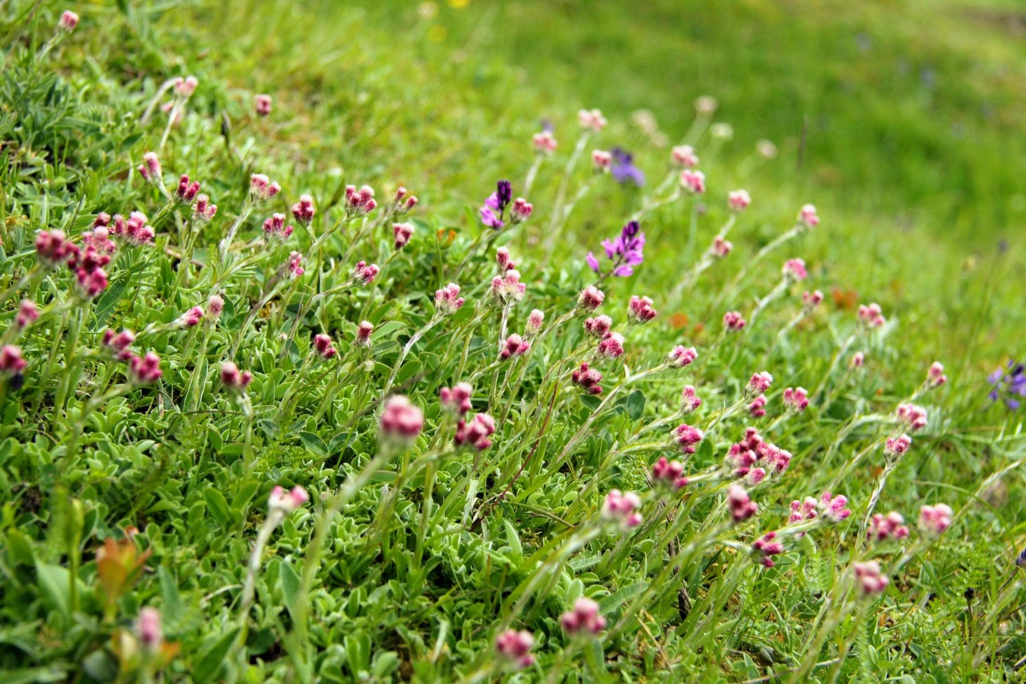 hemsta hagar blommor
