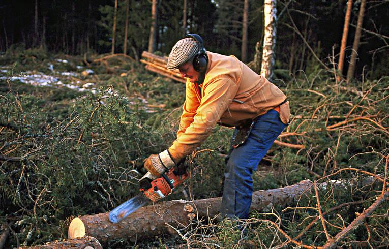 Bildresultat för skogsarbetare