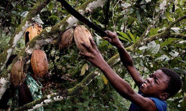 Los niños del cacao