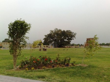 Nayab City Multan Central Park spring flowers (2)