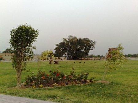 Nayab City Multan Central Park spring flowers (2)