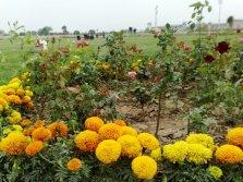Nayab City Multan Central Park spring flowers