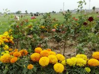 Nayab City Multan Central Park spring flowers