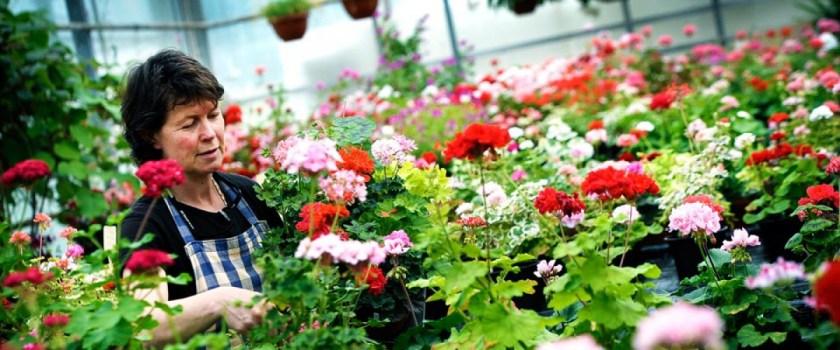 Bildresultat för flädergården i vinslöv