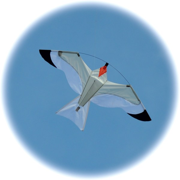 Gull kite - great as a bird scarer crop protector and also to fly from a pole