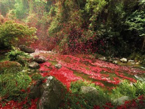 Une pluie de fleurs pour Sony Bravia