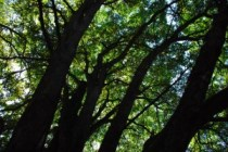 trees in seattle