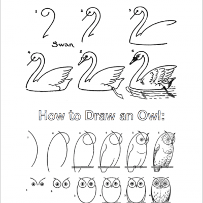 Birds to Draw, Color, Feed, and Photograph