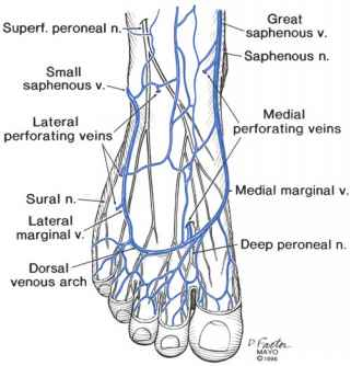 veins in the foot diagram glow stick anatomy of lower extremity varicose figure 2 7 superficial and perforating ankle