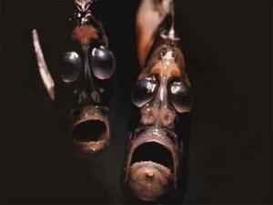 ScaryFish