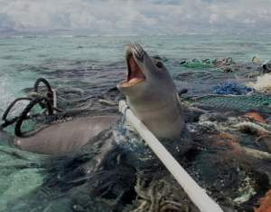 Great Pacific Garbage Patch_foca