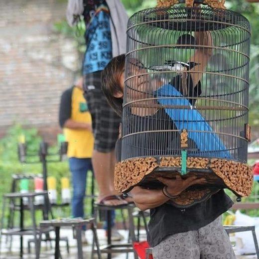 Perawatan burung kacer