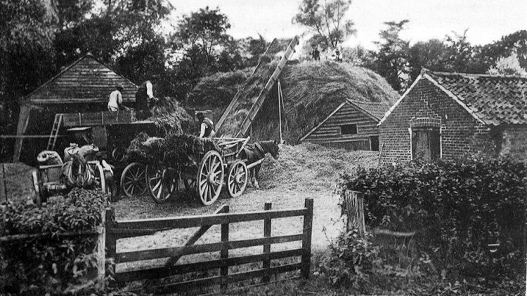 Black and white photo of Hay-Making at Valley Farm - around 1906