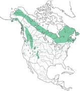 Pine Grosbeak Distribution