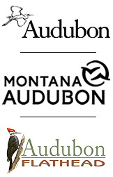 Three Levels of Audubon