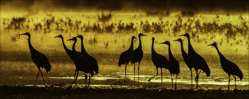 Sandhill Cranes Sunset in West Valley - Photo Credit: Dick Walker