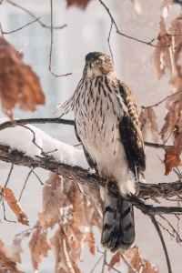 close up photo of bird on tree branch