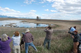 5-4-2013 Wetland Birds Tour (5)