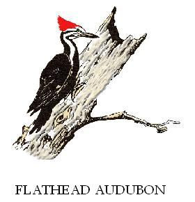 FAS Pileated