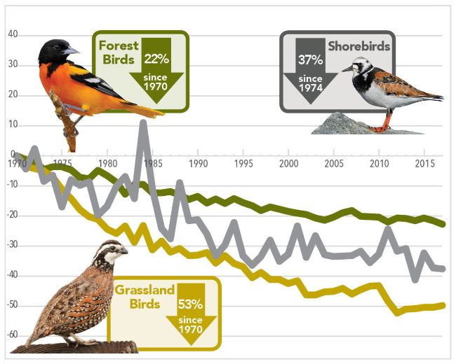 American Birds Declining Faster Than Expected