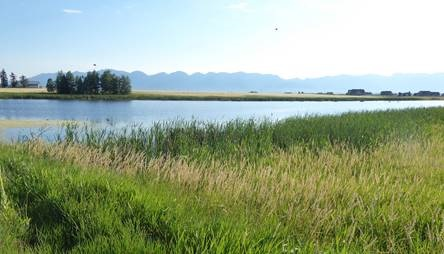 Conservation Project Protects Reed's Slough