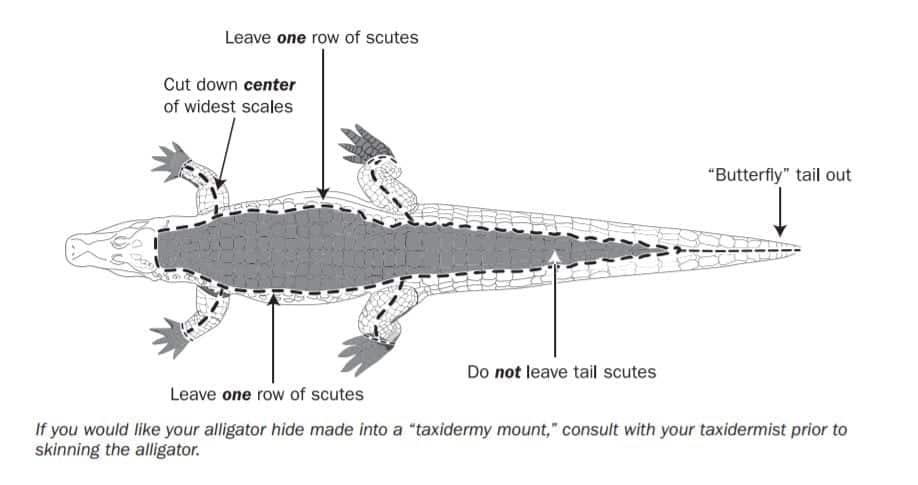 How to Properly Skin & Butcher Alligator