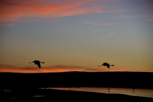 Reserva_dos_Flamingos_Atacama_18