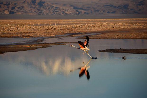 Reserva_dos_Flamingos_Atacama_9