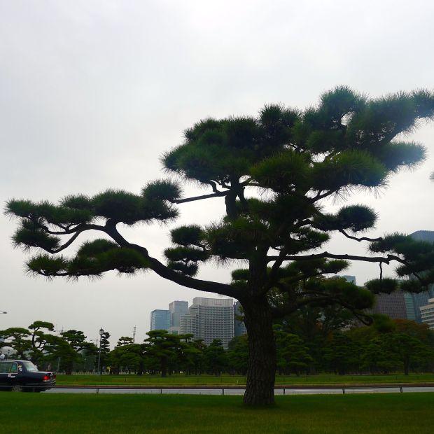 Toquio_9