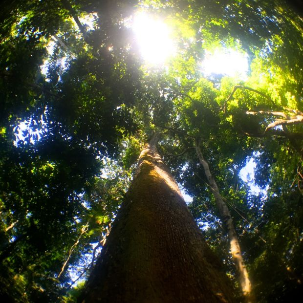 Cristalino_Lodge_Amazônia_72