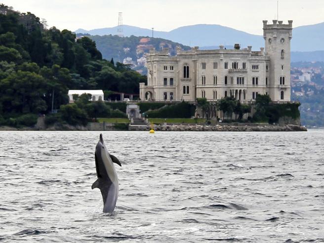 Dolphin enjoying the sea in front of Castello Miramare, Trieste