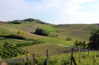Vineyards of Franco Conterno, Piemonte, Italy