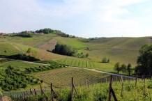 Vineyards of Franco Conterno, Piemonte, Italy