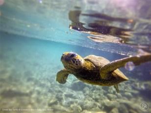 """Hello Buddy!"" says the Green Sea Turtle"