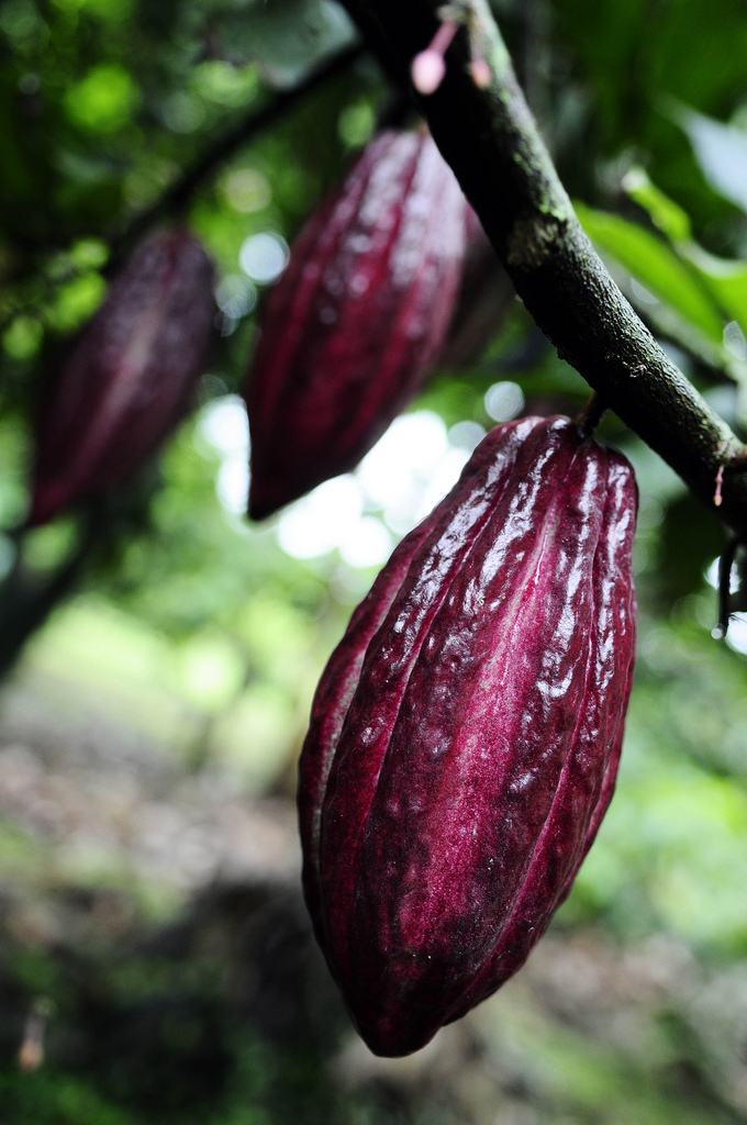 The World Loves Colombian Chocolate