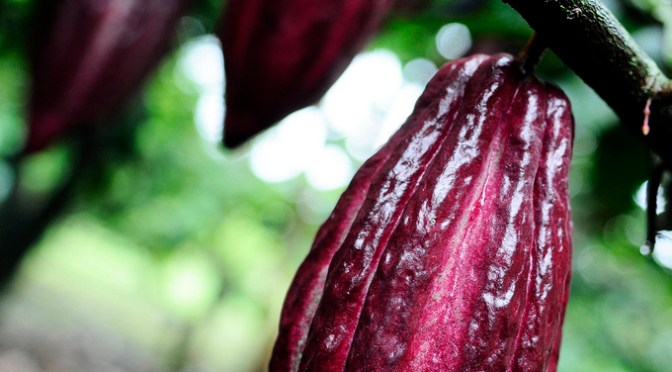 The World Loves Colombian Chocolate   Flavors of Bogota